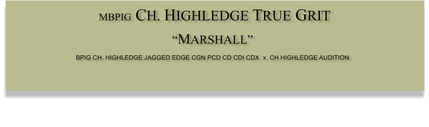 "MBPIG CH. HIGHLEDGE TRUE GRIT  ""MARSHALL"" BPIG CH. HIGHLEDGE JAGGED EDGE CGN PCD CD CDI CDX  x  CH HIGHLEDGE AUDITION"